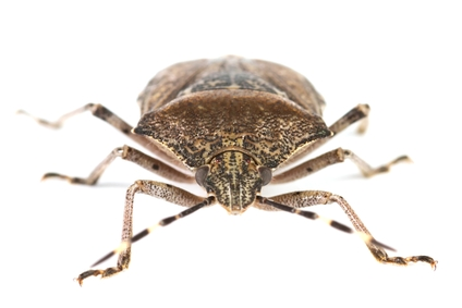 Finding The Right Sprays To Kill Bed Bugs