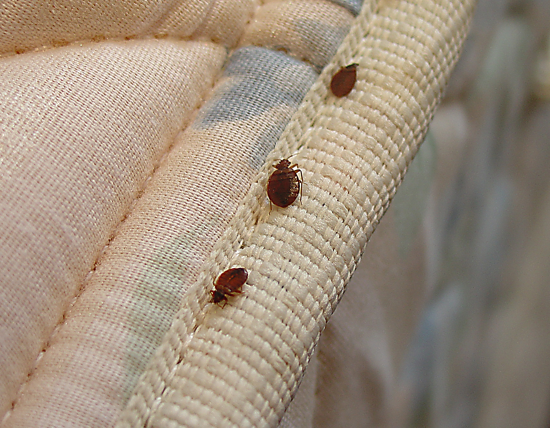 Getting Rid of Bed Bugs – 10 Places Bed Bugs Love To Hide!