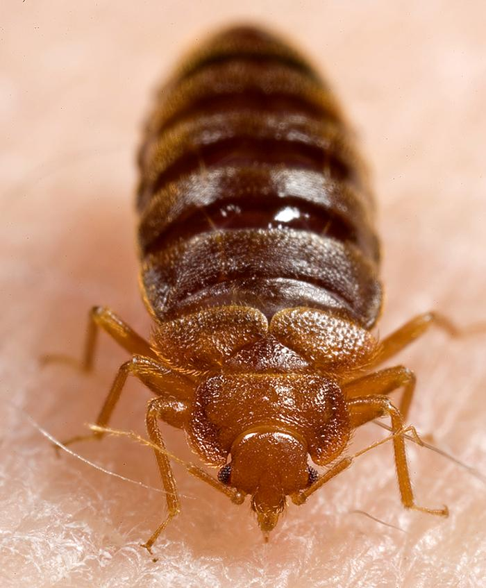 What Causes Bed Bugs? 6 Ways They Find A Way Into Your Home
